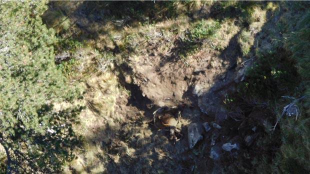 Imatges aèries de l'os Goiat al Pirineu, protegint un cérvol mort.
