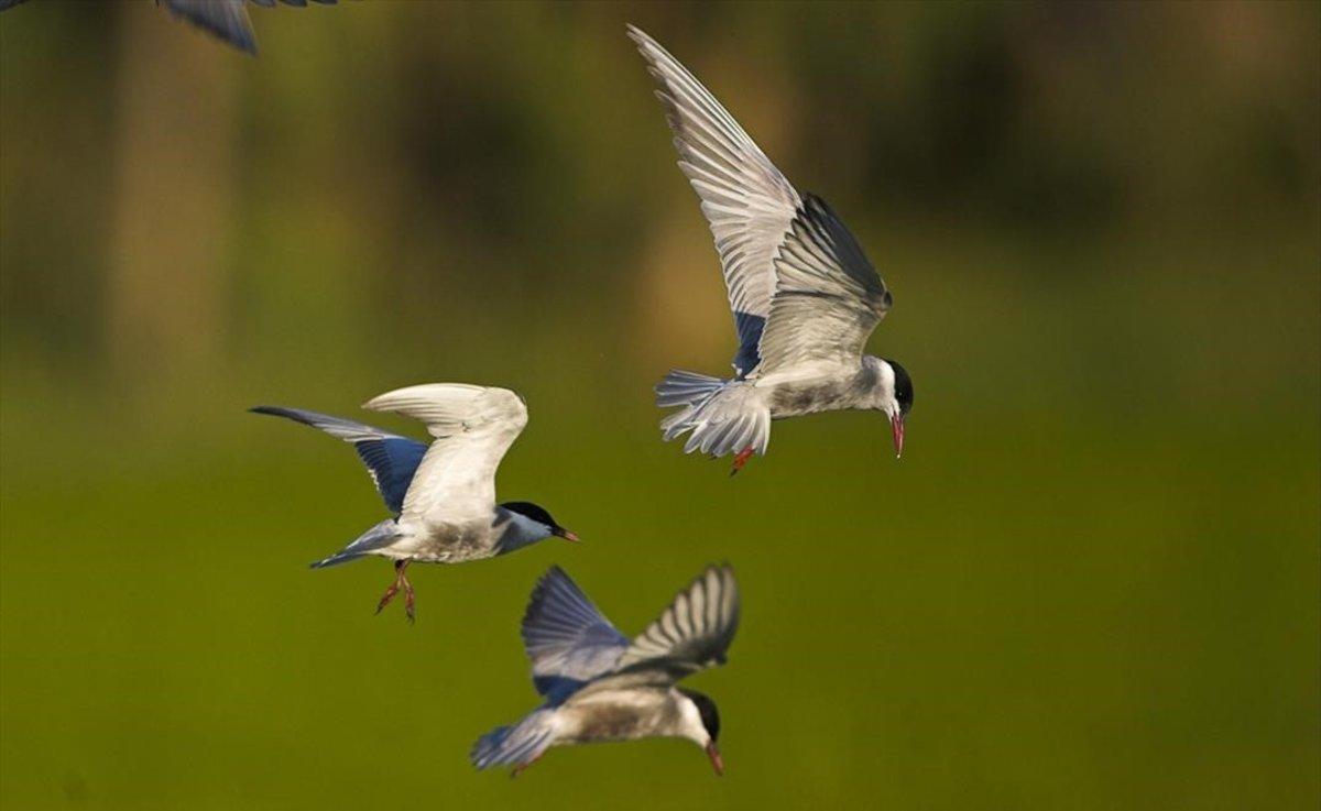 Pájaros en el Delta de l'Ebre.