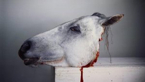 Cabeza de caballo, en una de las fotografías expuestas en la muestra de la Fundación Mapfre.