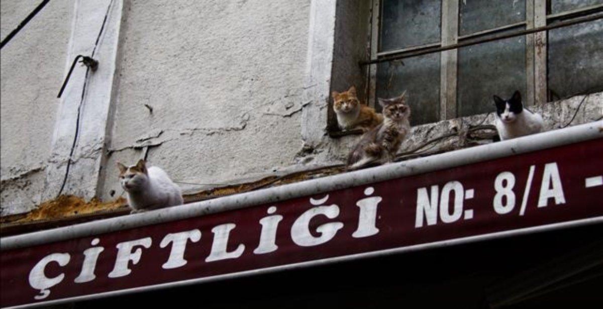 Unos gatos subidos en la fachada de un edificio de Estambul.