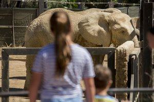 Unos niños contemplan a unelefante enel Zoo de Barcelona.