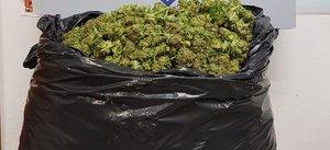 Imagen de la bolsa de basura con los 15 kilos de cogollos de mariguana.