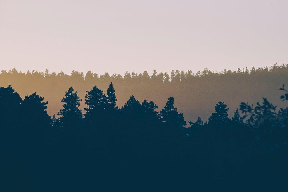 Bosquia, la startup que te permite apadrinar un árbol o regalar uno