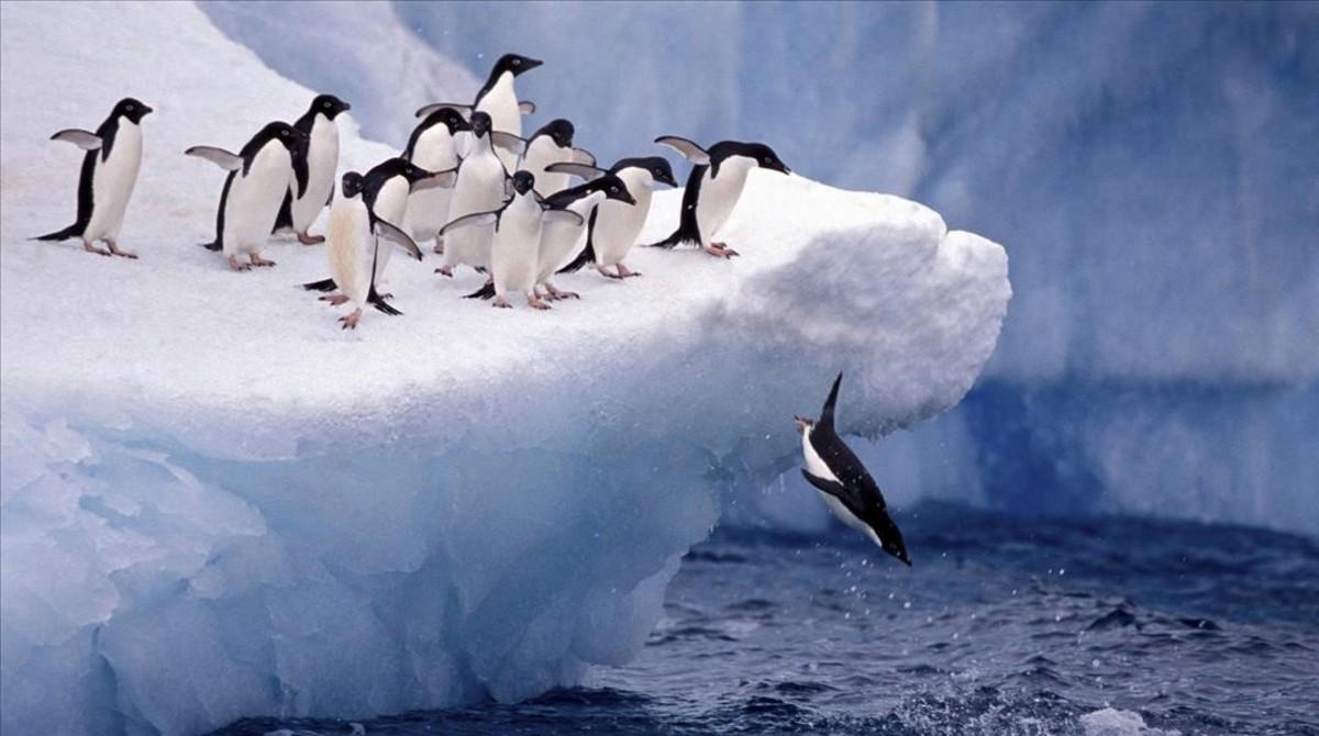 Greenpeace troba plàstics i químics a l'Antàrtida