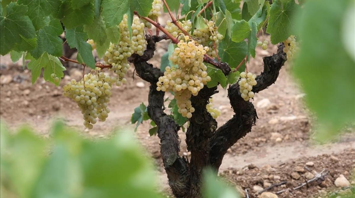 Pel vi se sap com canvia el clima