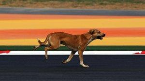Un perro callejero en Nueva Delhi.