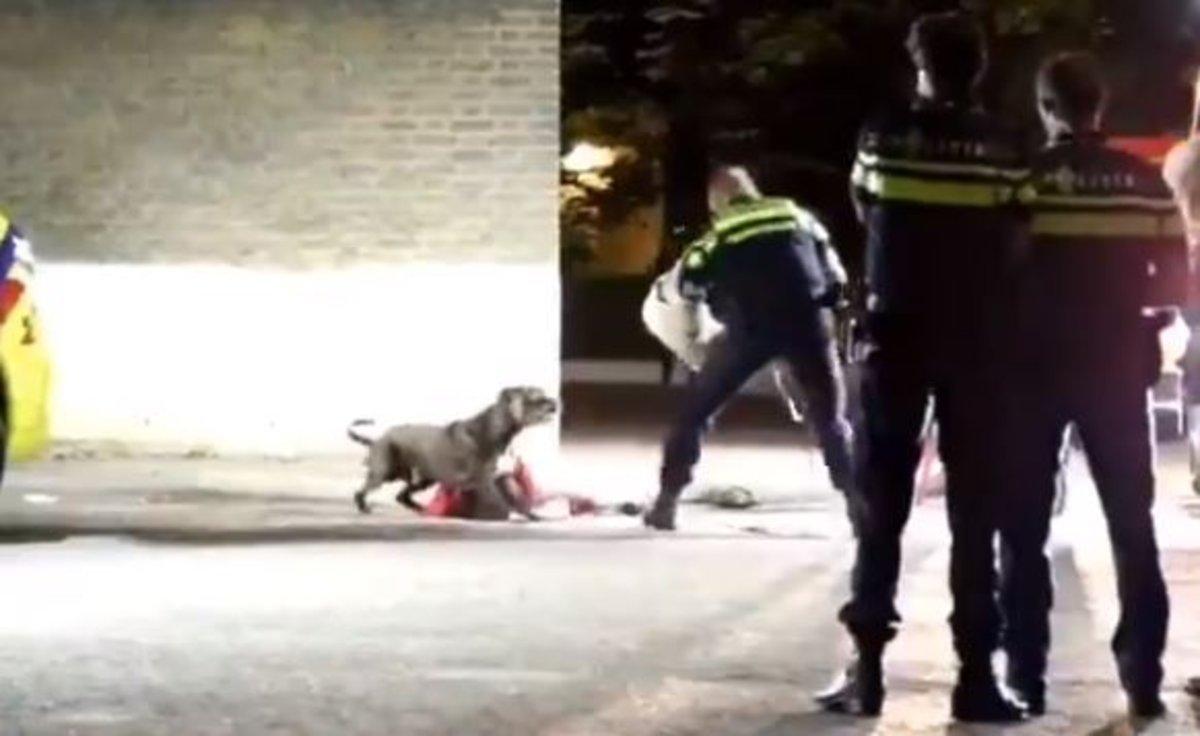 El vídeo que muestra cómo la policía puede controlar a un perro en una emergencia sin dañarlo