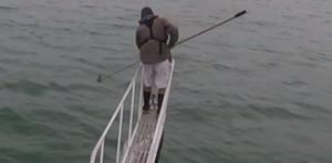 El sorprendente ataque de un tiburón blanco a un científico que lo grababa