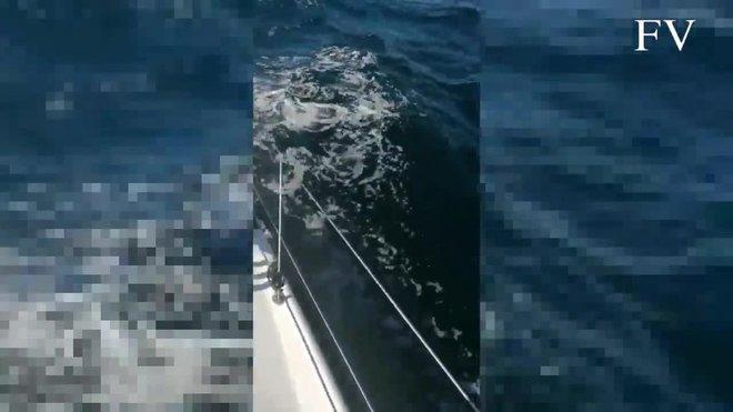 Unas orcas arrancan a bocados parte del timón de un velero de la Armada.