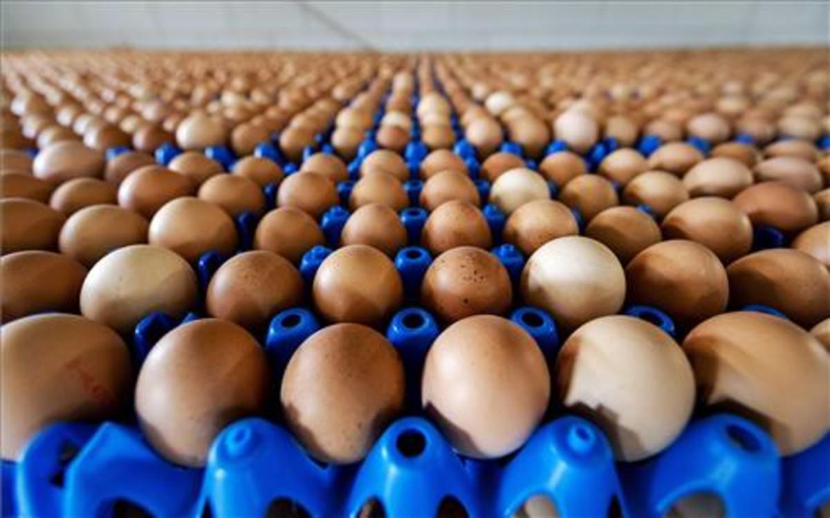 Vista de la producción de huevos de una granja en Putten (Holanda).