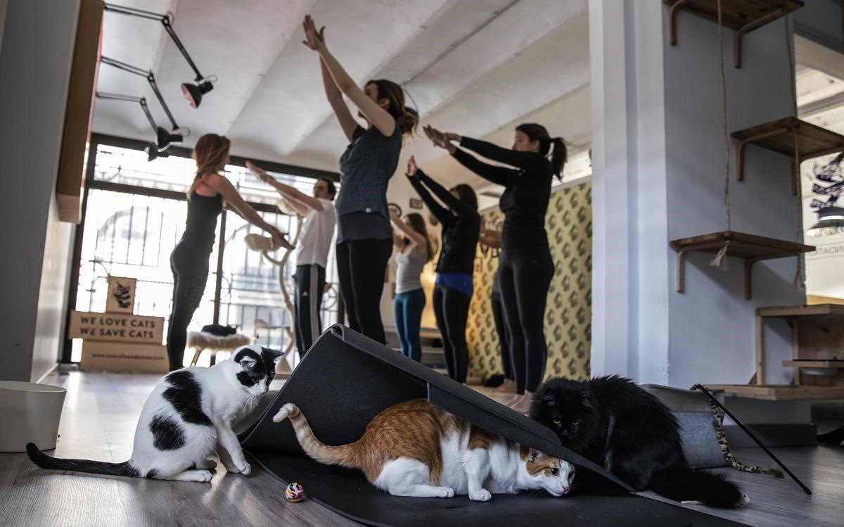 Sasha, Joris y Dax siguen la clase de yoga bajo una esterilla en la Cat House de Suara Foundation.