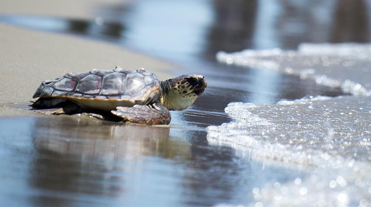 Centro de recogida de tortugas barcelona