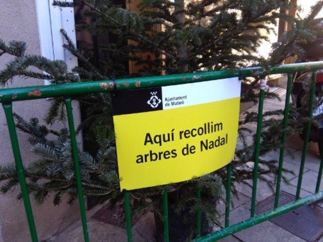 A partir del 9 de gener Mataró habilitarà 32 punts de recollida d'arbres de Nadal per convertir-los en abonament