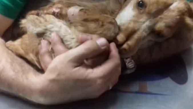Detenidas diez personas por maltrato animal a 16 perros, en Vélez-Málaga.