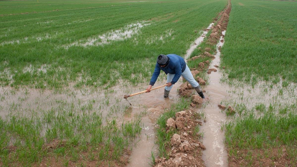 Jornalero trabajando en el campo.