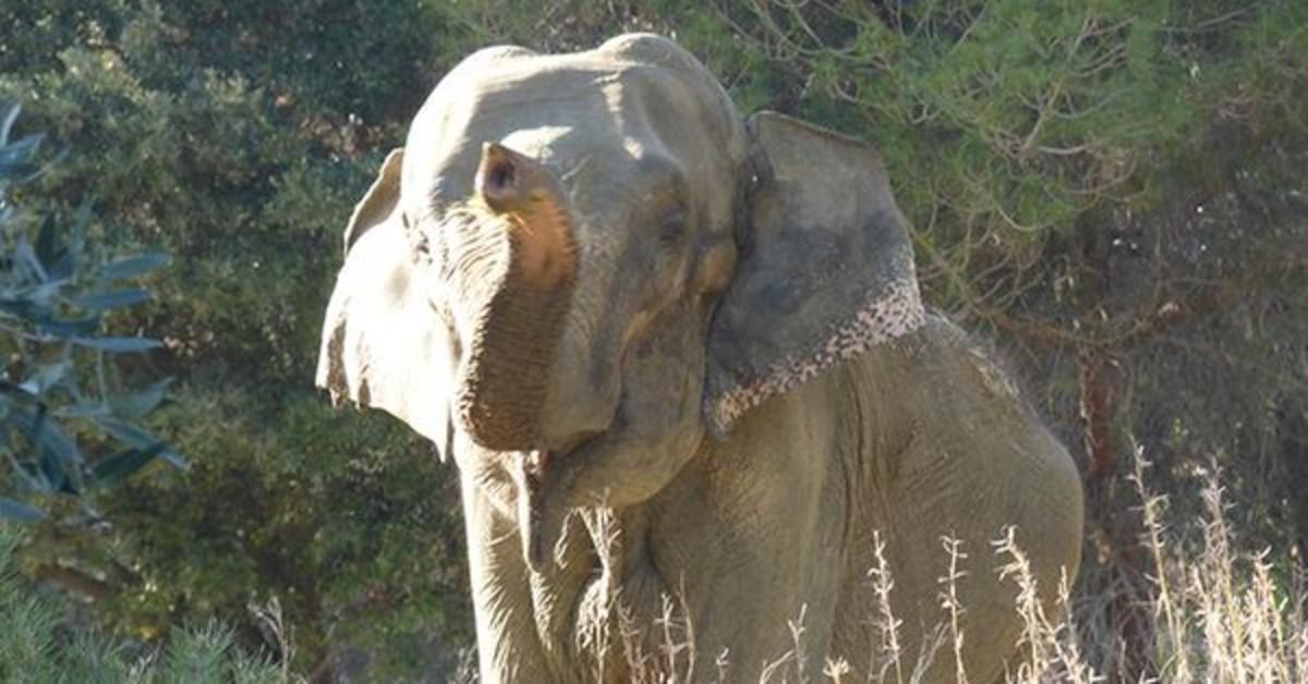 Recogidas de firmas para liberar a la elefanta 'Dumba' de un jardín de Caldes de Montbui