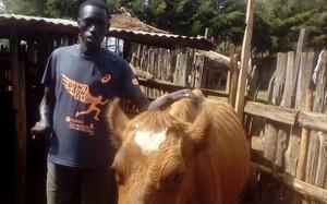 Jonah Chesum, con lavaca 'Barcelona', en su granja de Kenia.