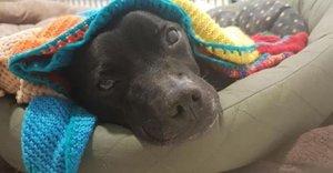 Maisie, la mujer de 89 años que ha tejido 450 abrigos para perros abandonados