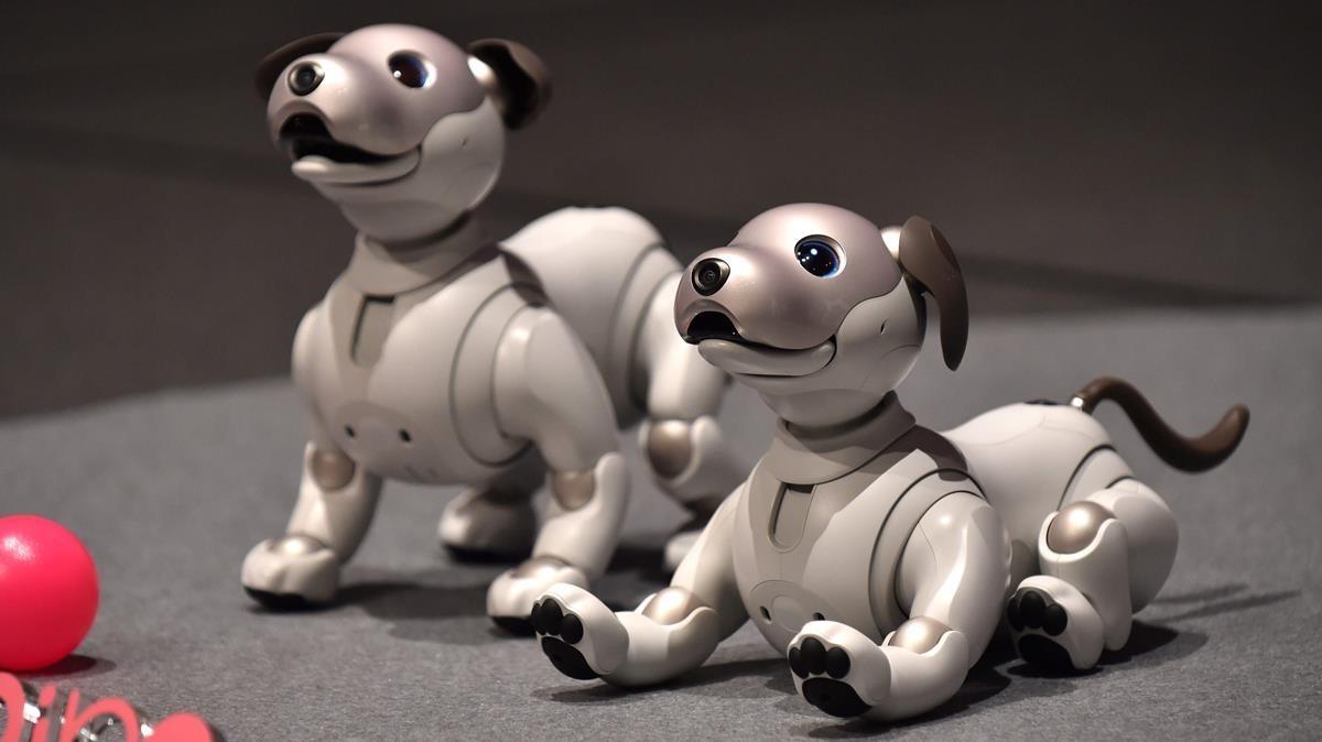 Robot canino desarrollado por la empresa japonesa Sony.