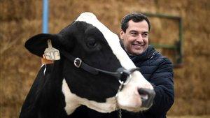 El voto de las vacas