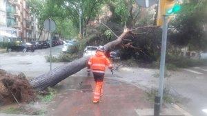 Un bombero, ante un árbol caído en la calle Fluvià de Barcelona, el domingo.