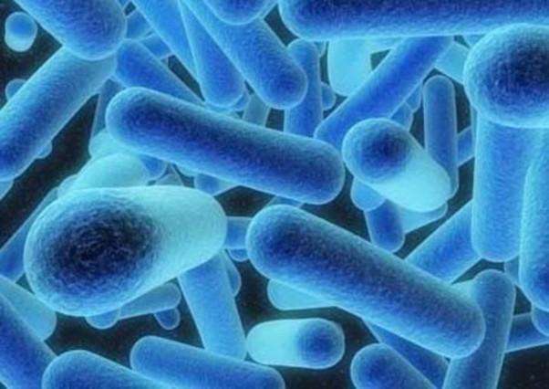 El bacteride la legionel·la.
