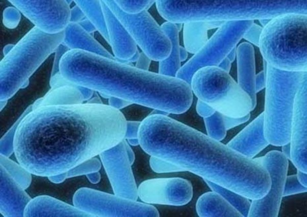 La bacteriade la legionela.