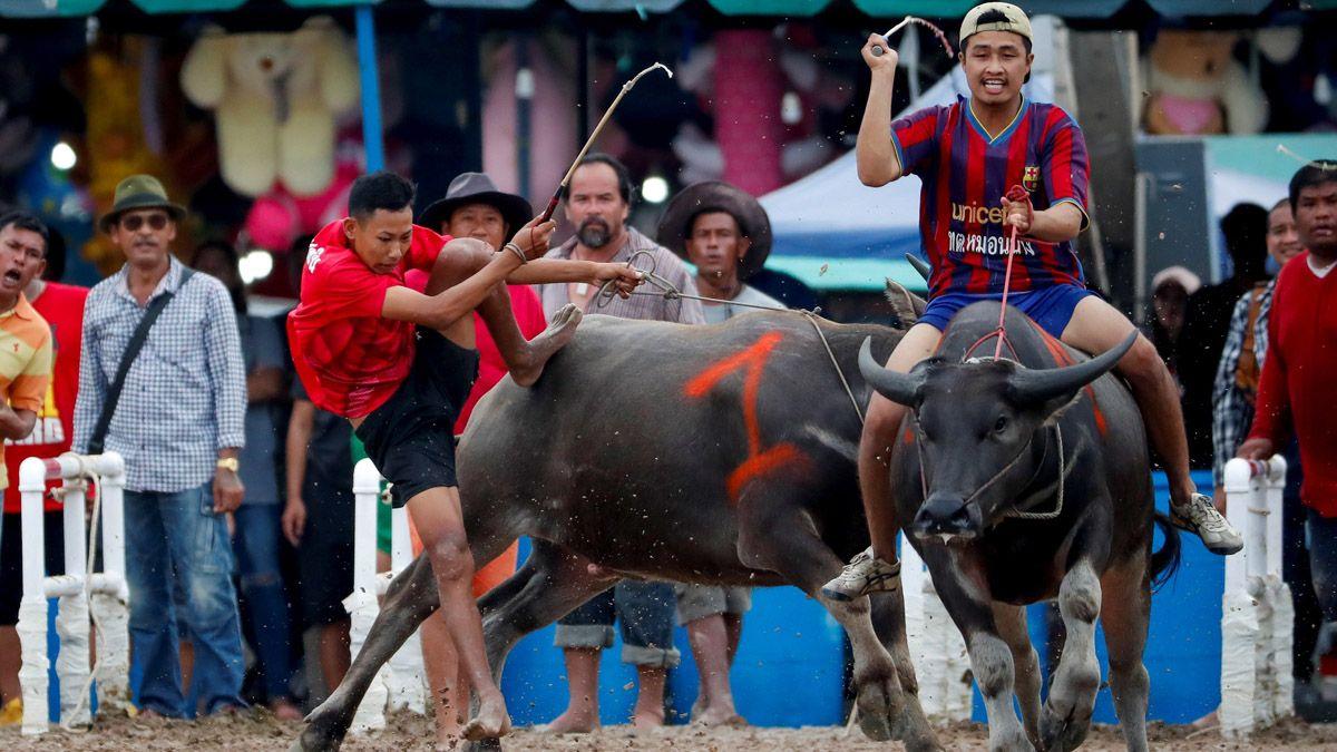 Las carreras de búfalos levantan pasiones y críticas en Tailandia