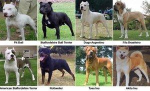 Perros considerados peligrosos por la Comunidad de Madrid.