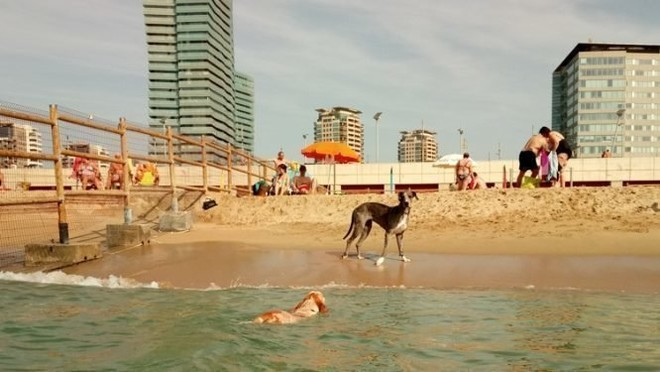 Playa para perros.