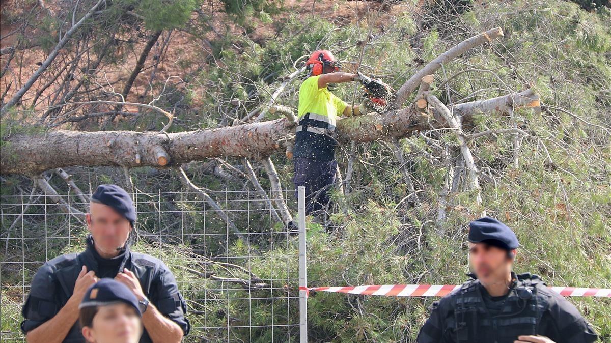 Un operario tala un árbol de la Pineda del Castell de Castelldefels bajo la custodia de los Mossos d'Esquadra.