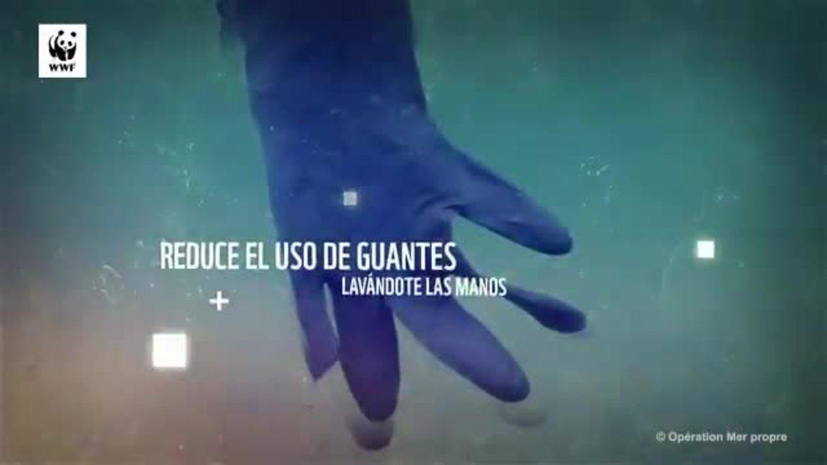 Un tsunami que los animales confunden con medusas o se quedan atrapados en él.