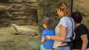 Colau tira endavant la reconversió del Zoo de Barcelona