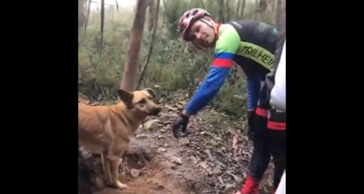Un grupo de ciclistas rescata a un perro atado a un árbol para que muriera de hambre