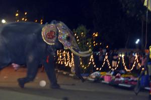 El elefante, en su huída.
