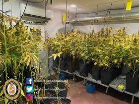 En una habitación había 47 plantas de marihuana. Otra se encontraba completamente preparada para poner más plantas, y una tercera habitación estaba siendo habilitada.