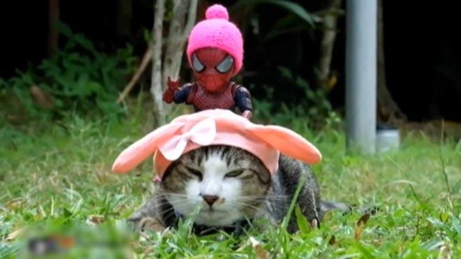 Gatos y superhéroes, fórmula exitosa para redes sociales.