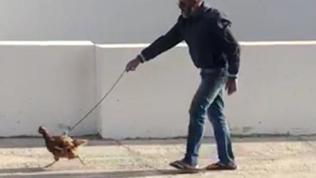 El hombre de 51 años que pasea a su gallina en Yaiza (Lanzarote) durante el estado de alarma