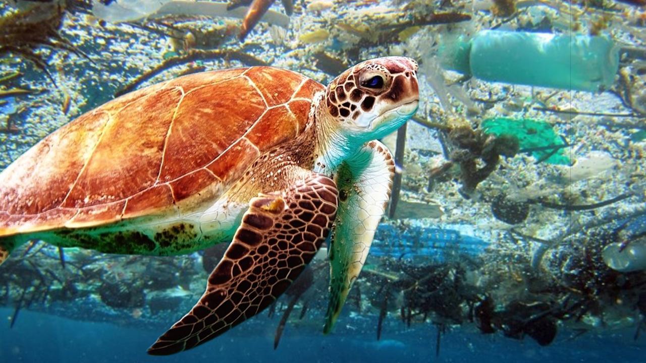De nuevo, otra tortuga sufre por la polución humana.
