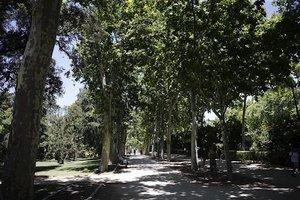 Paseo repleto de árboles y vegetación.