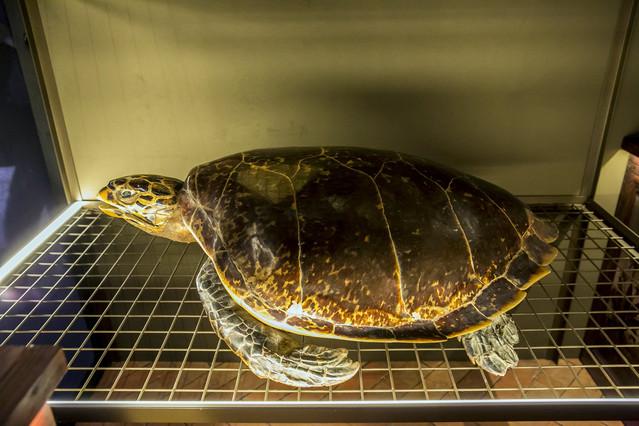 Un dels animals dissecats que es poden presenciar des daquest dilluns a lexposició Salvadoriana, a Barcelona.
