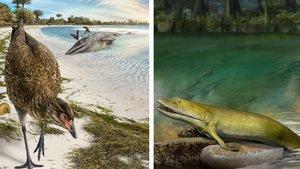 Reconstrucción artística de un 'Asteriornis maastrichtensis' y un 'Elpistostege watsoni'