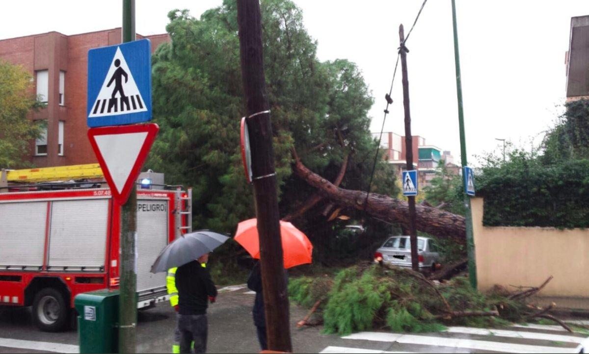Árbol caído entre las calles Lluis Millet y Francesc Moragas de Esplugues