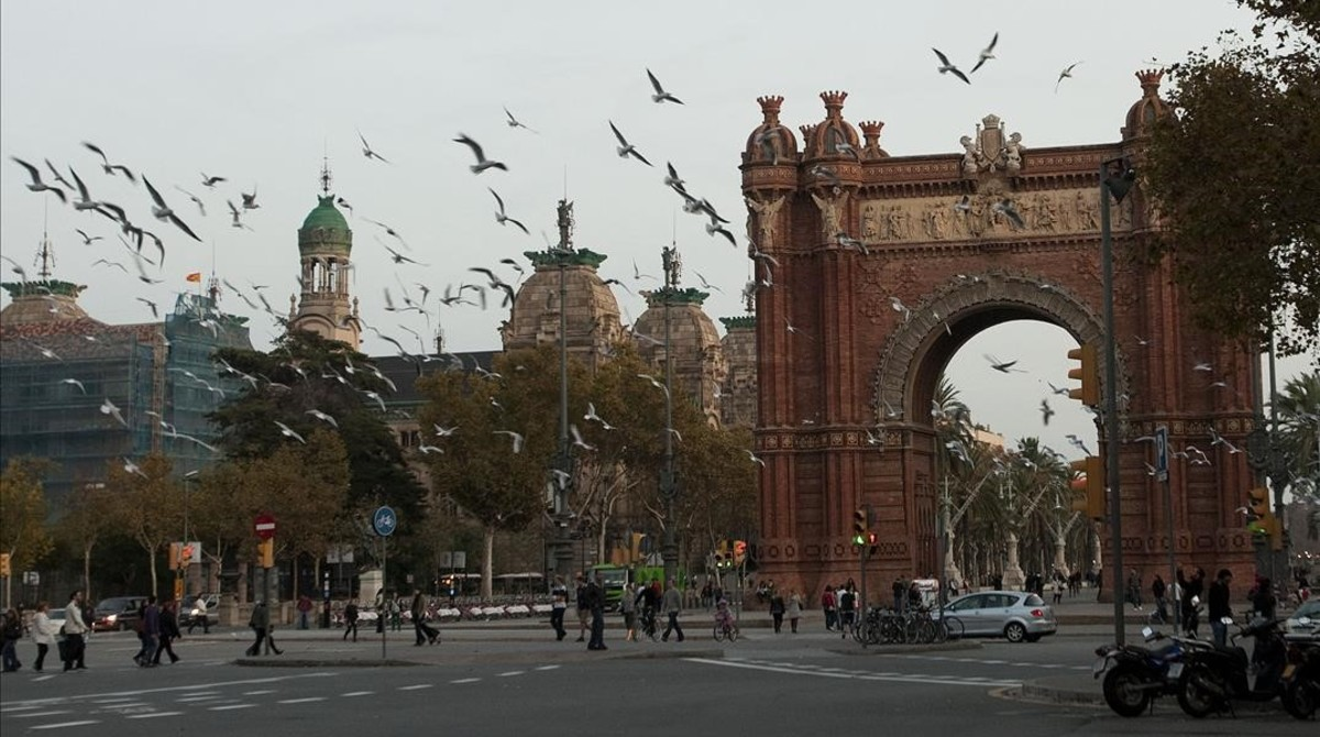 Las heces de un 50% de las gaviotas de Barcelona tienen bacterias multirresistentes a antibióticos