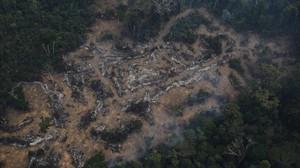 Los números muestran que la deforestación registrada en julio equivale a más de un tercio de todo el volumen diezmado en los últimos 12 meses.