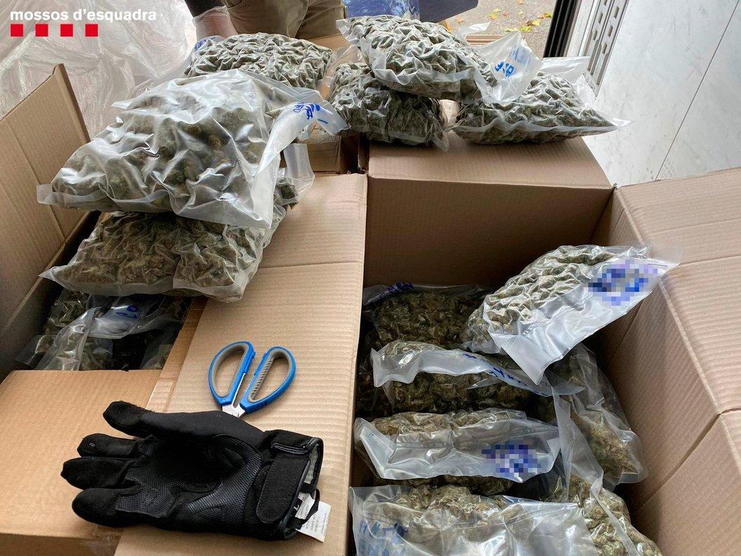 Enxampat un camioner a l'AP-7 amb 80 quilos de marihuana entre productes congelats