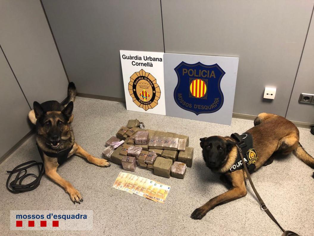 Los 20 kilos de hachís comisionados en Cornellà junto a dos perros de la unidad canina