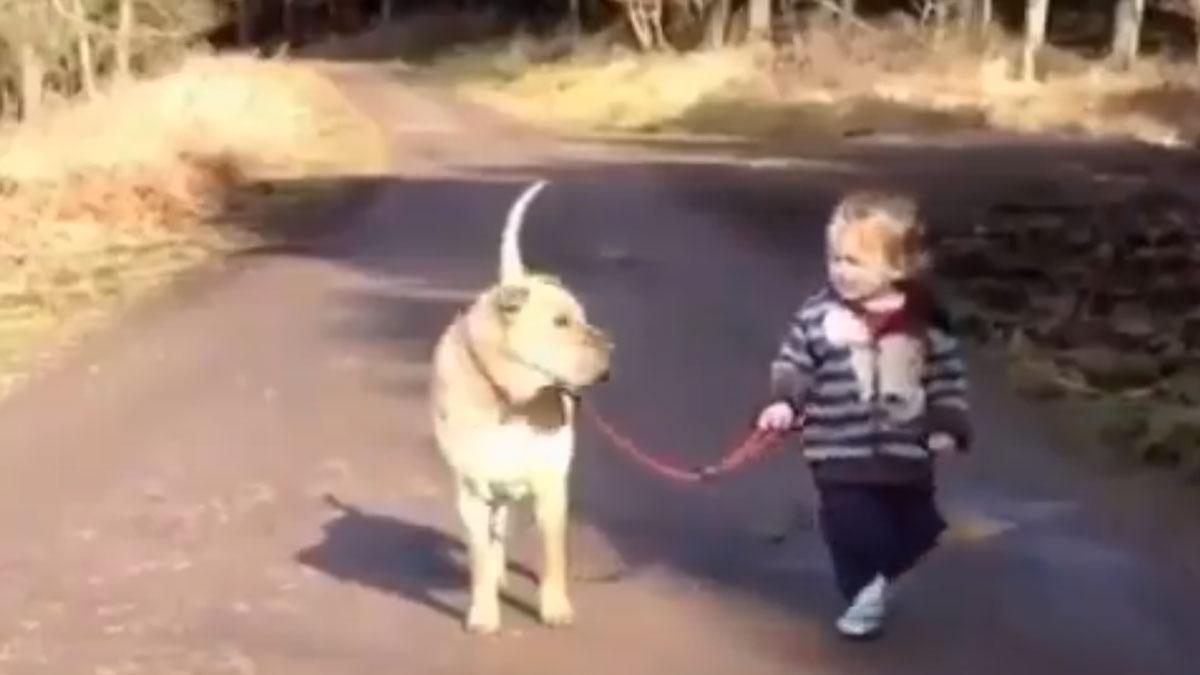 El entrañable vídeo compartido por Dani Rovira en que un niño para su paseo para pisar un charco mientras su perro le espera.