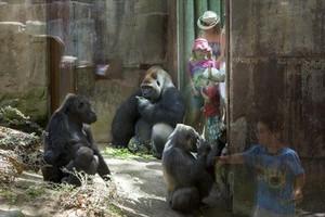 El recinto de los gorilas del Zoo de Barcelona.