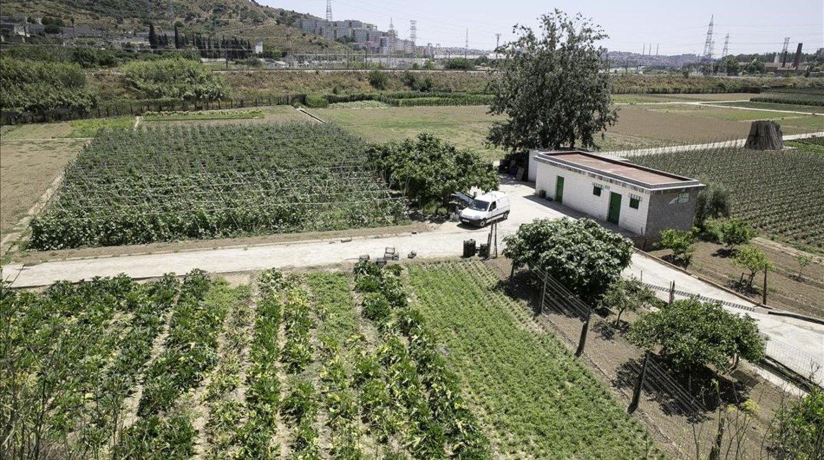 SOS per La Ponderosa: l'última horta regada per les aigües del Rec Comtal